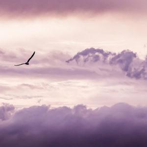 Alltags-Yoga Du kannst fliegen Selbstvertrauen