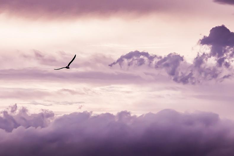 Du kannst fliegen