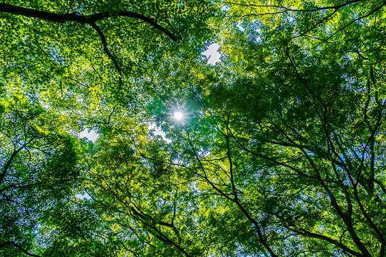 Der Waldlauf – Du bist der wichtigste Mensch in deinem Leben